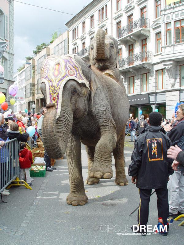 Schweizer National-Circus Knie - Zürich ZH 2004