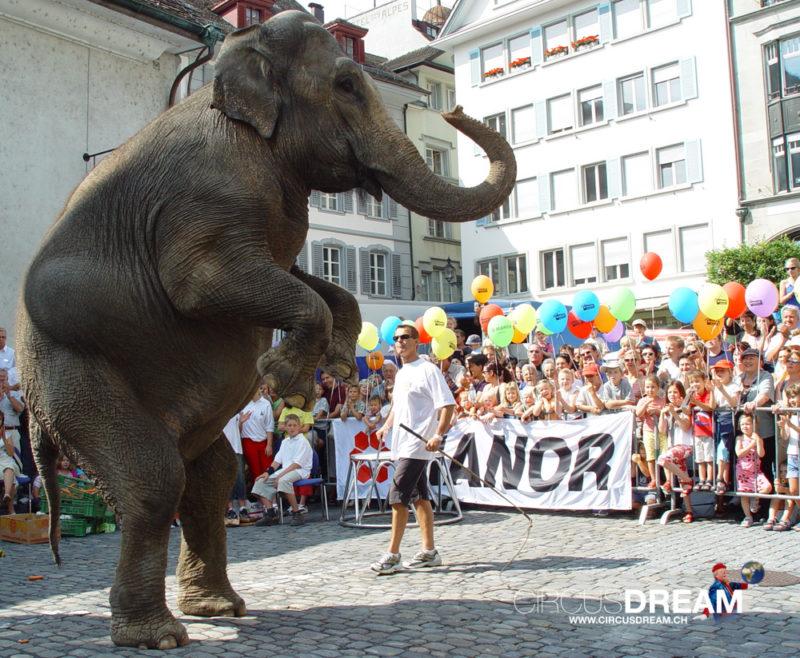 Schweizer National-Circus Knie - Luzern LU 2003