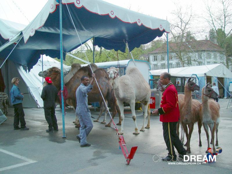 Schweizer National-Circus Knie - St.Gallen SG 2003
